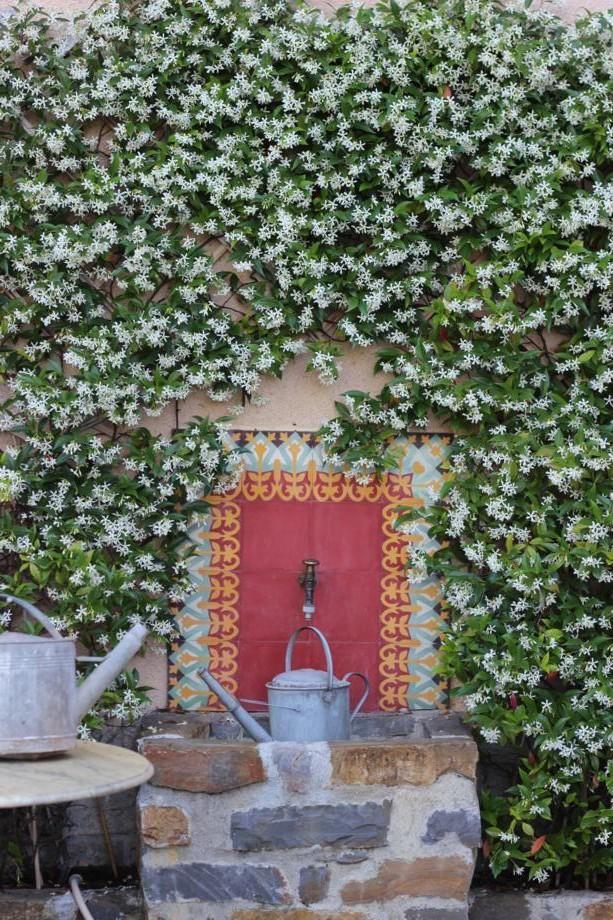 Jasmine framing tile and stone faucet. Fragrant heaven. | Gardening ...