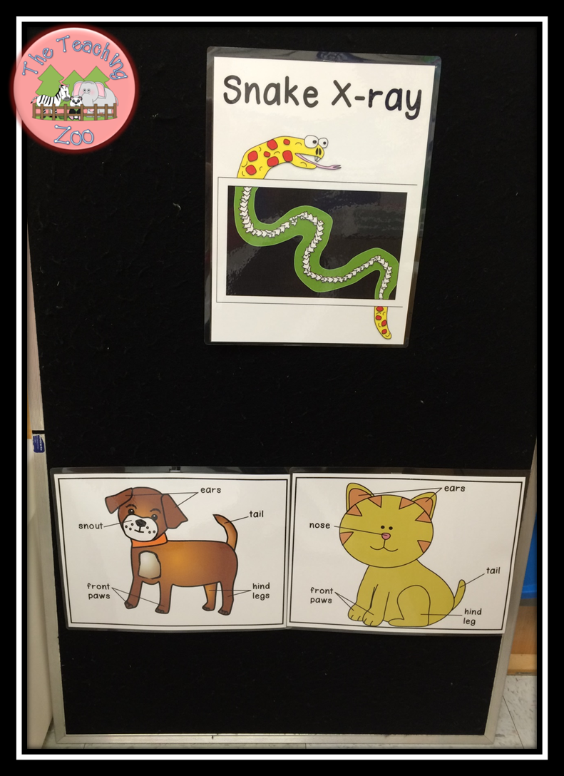 Pin On The Teaching Zoo Blog