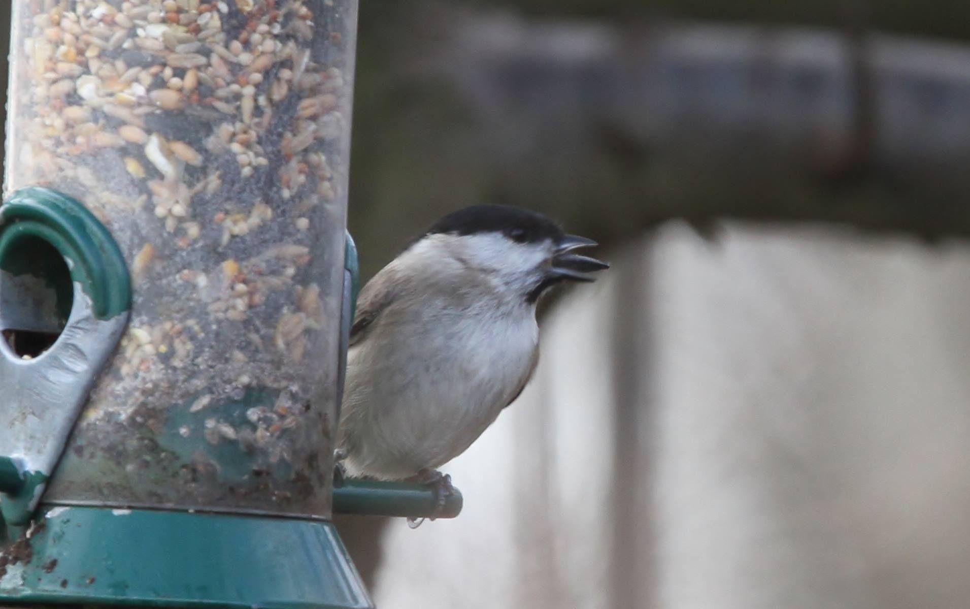 ecotough garden birds youtube wild watch ground covered feeder unlimited