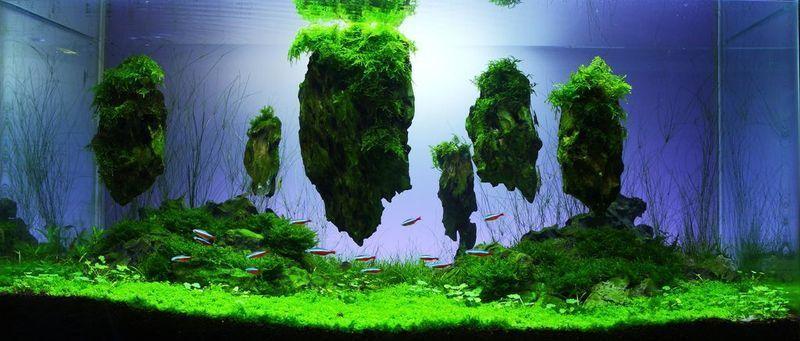 Aquarium Aquarien 60l