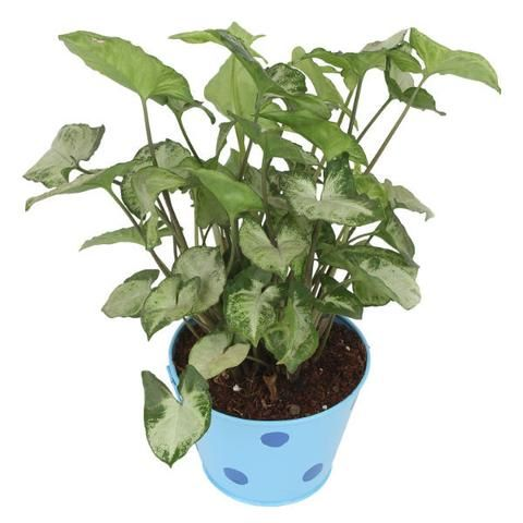 House Plants Online Indoor Container
