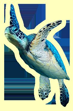 Turtle Sea Turtle Art Sea Turtle Painting Green Sea Turtle