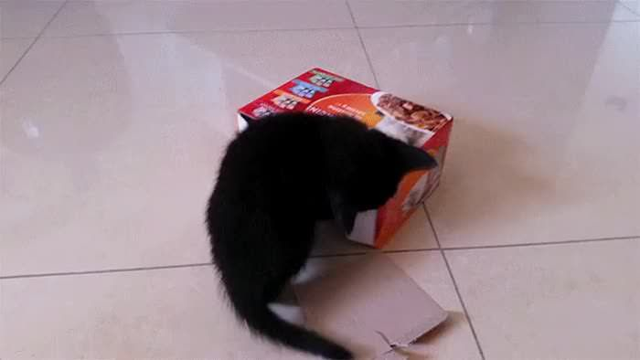 Little fella defending his fort