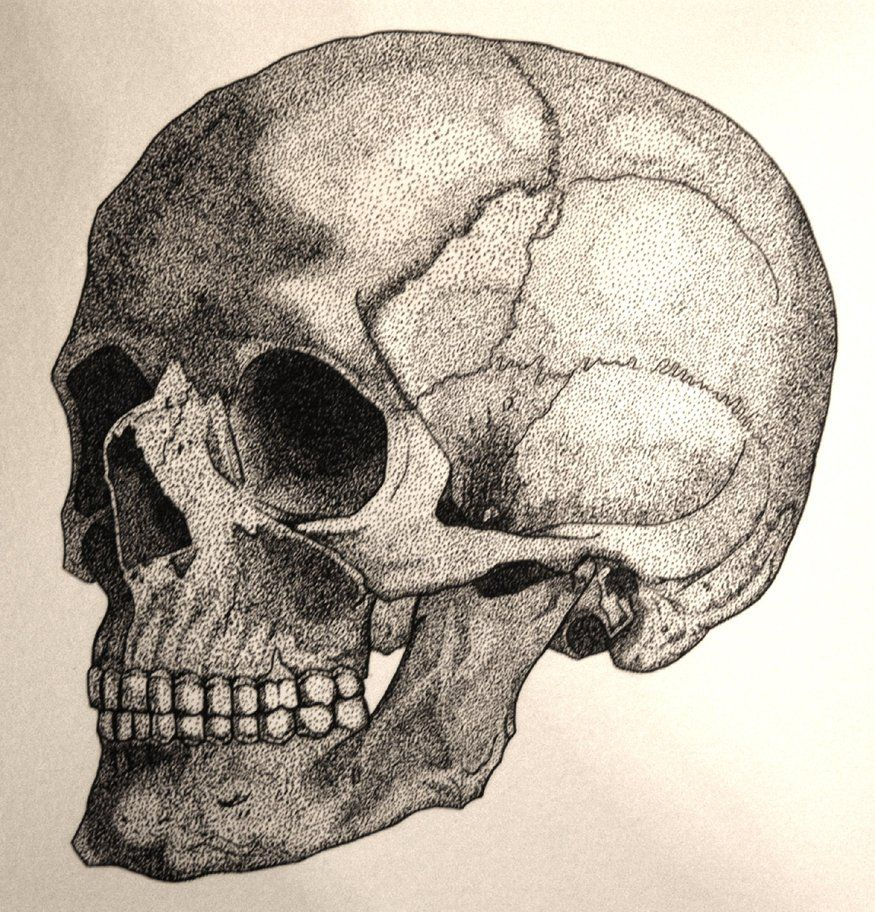 дитце картинки анатомический черепа барнауле открыли