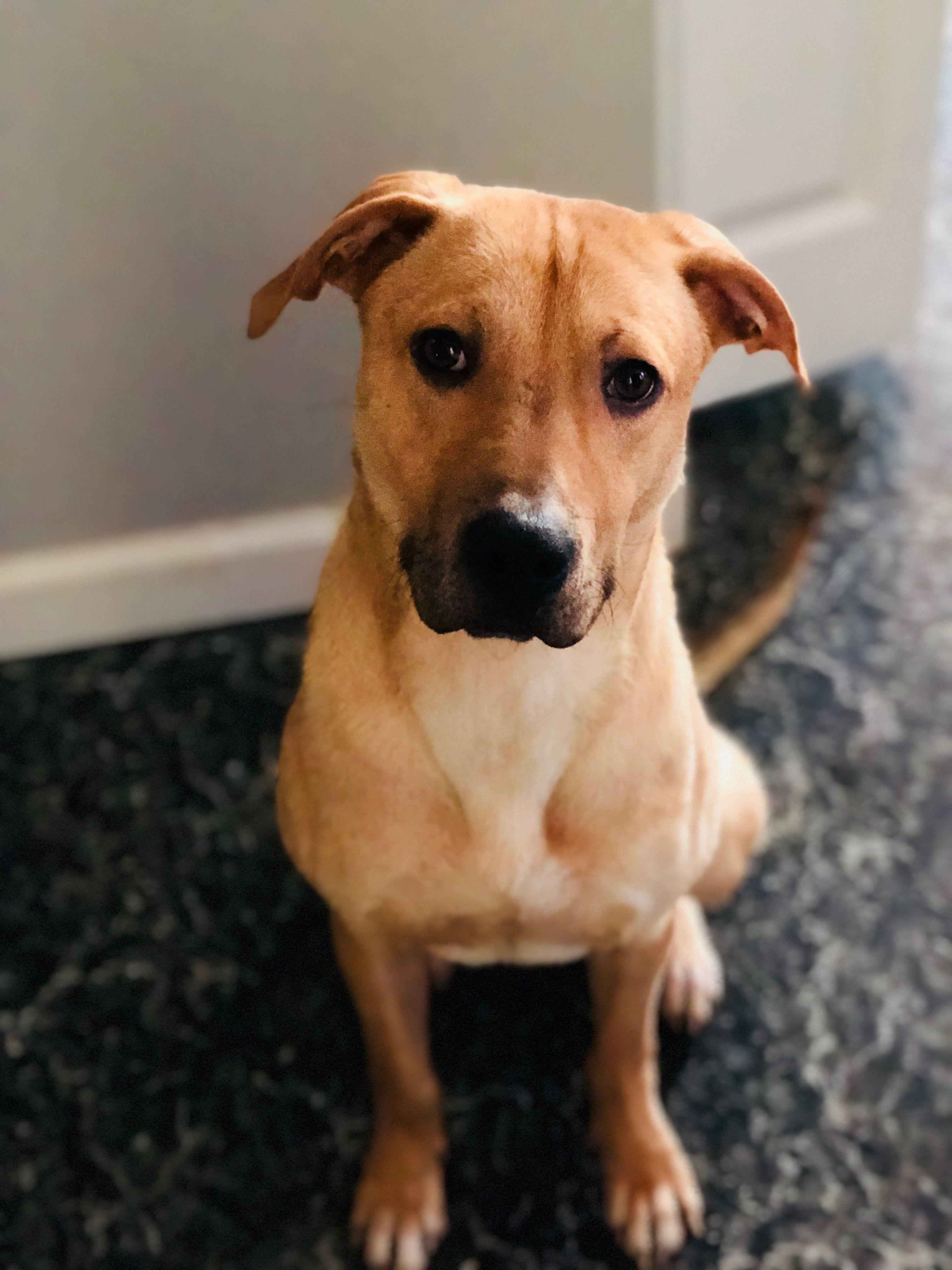 Adopt Bernie on German shepherd dogs, Dog search, Dogs