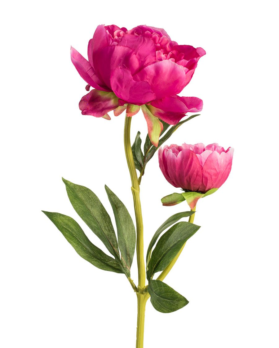 Peony Silk Flower Stem Silk Flowers Beautiful Flowers Peony Leaves