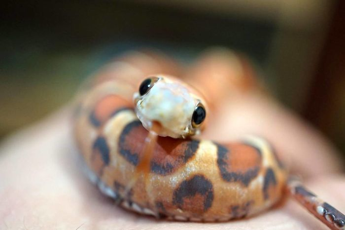 50 adorable snake pics that will help you conquer your fear cute