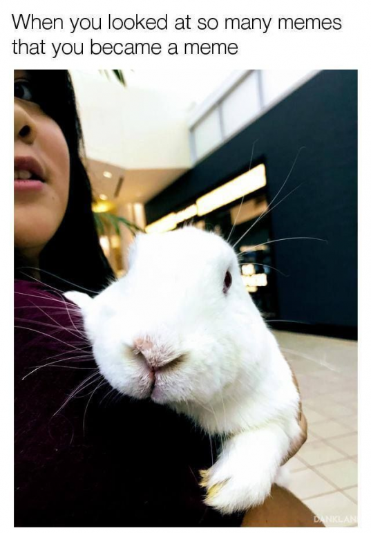 Fred wants to be his own meme! #rabbit #rabbits #rabbitlove #rabbithole #rabbitlife #rabbitofinstagram #bunny #bunnylove #bunnystagram #bunnylovers #bunnyrabbit #bunnygram #bunnylife #pet #pets #cute #rabbithouses