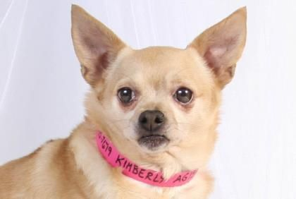Adopt Kimberly A Lovely 5 Years 11 Months Dog Available For