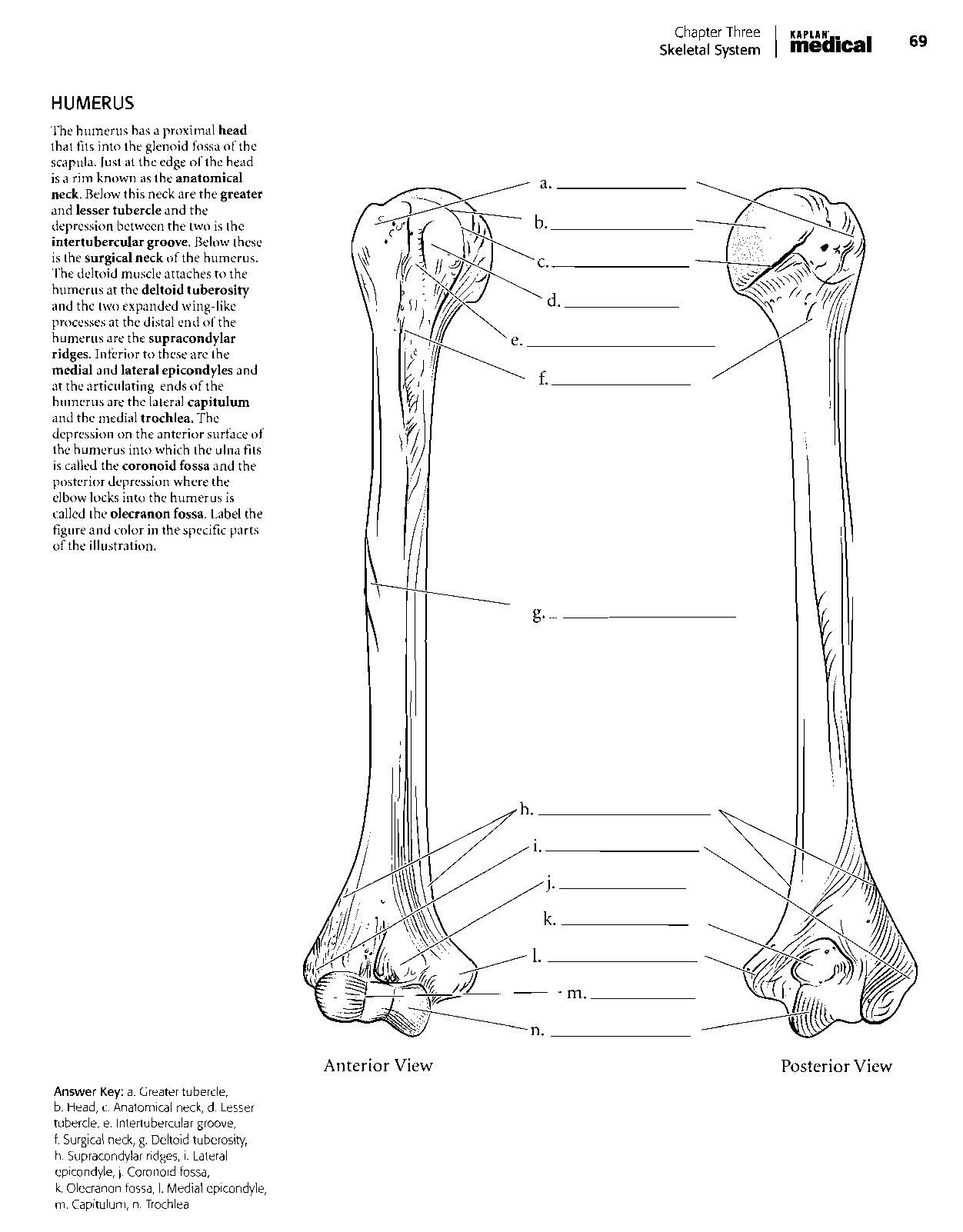 Kaplan Anatomy Coloring Book.pdf | boudli | Pinterest | Anatomy and ...