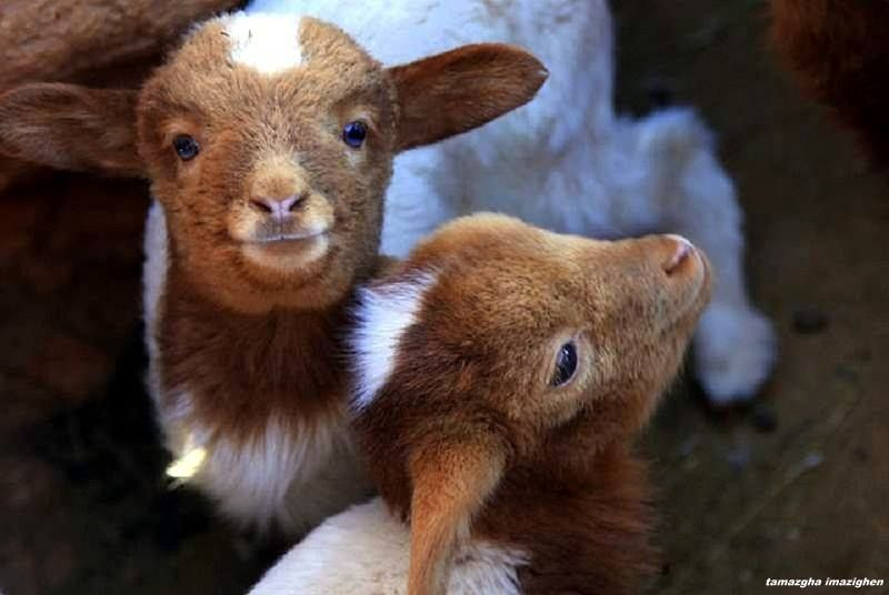 they are innocent beautiful creatures..