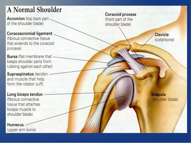 coracoacromial ligament এর ছবি ফলাফল | Shoulder joint ...