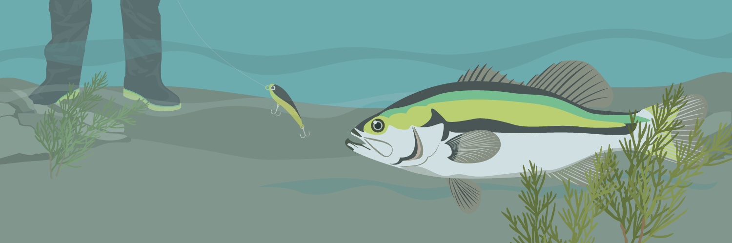 Do Fish See Fishing Line? Decoding Research and