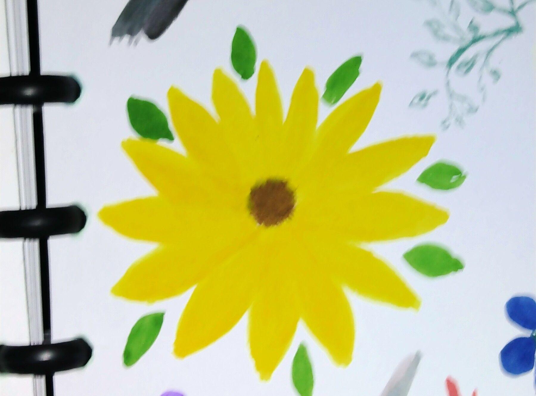Sunflower Sunflower Sunflower