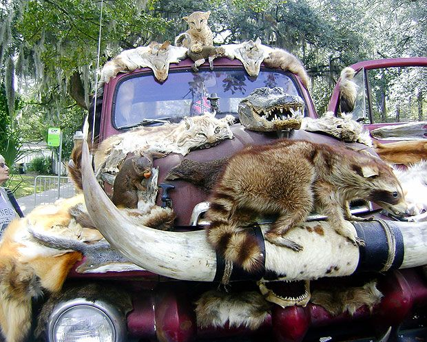 Taxidermy For One Driver Decorates His Truck With Dozens Of Dead