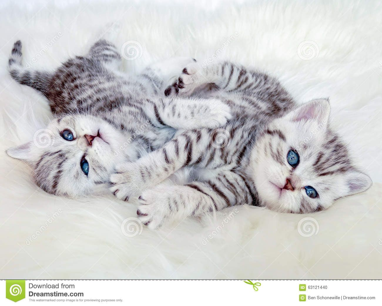 Pin Von Mac Cain Auf Bilder Baby Katzen Katzen Getigerte Katze