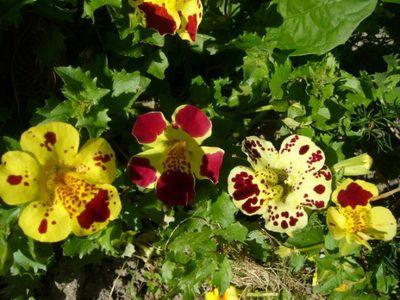 Тенелюбивые растения: фото и названия теневыносливых ...