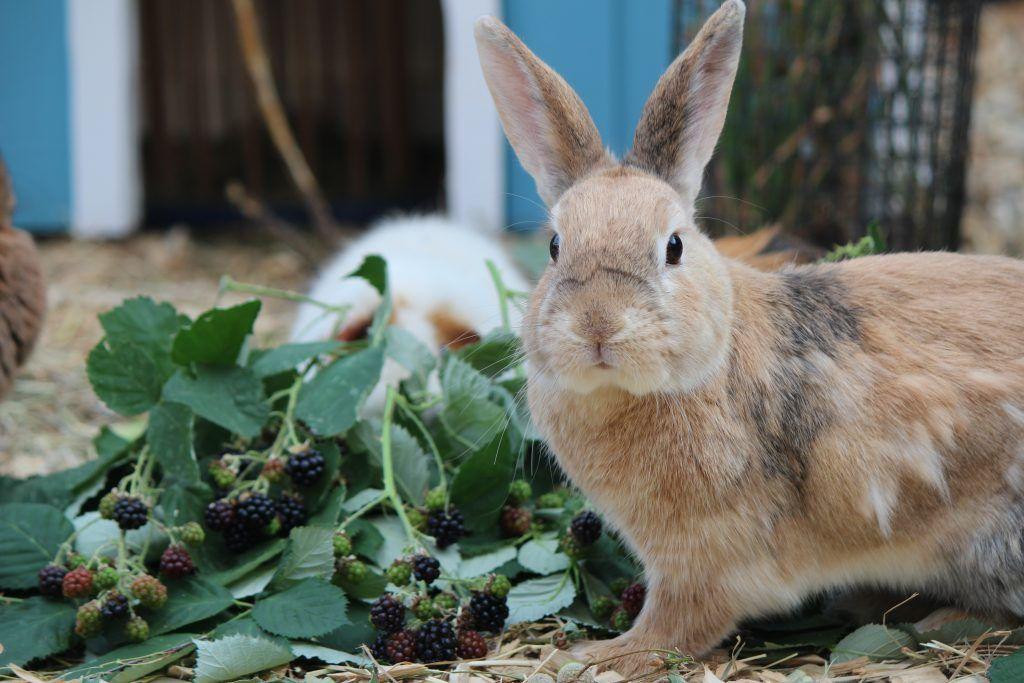 Kaninchendorf Langohrwelt Kaninchen Kaninchen Freigehege Freigehege