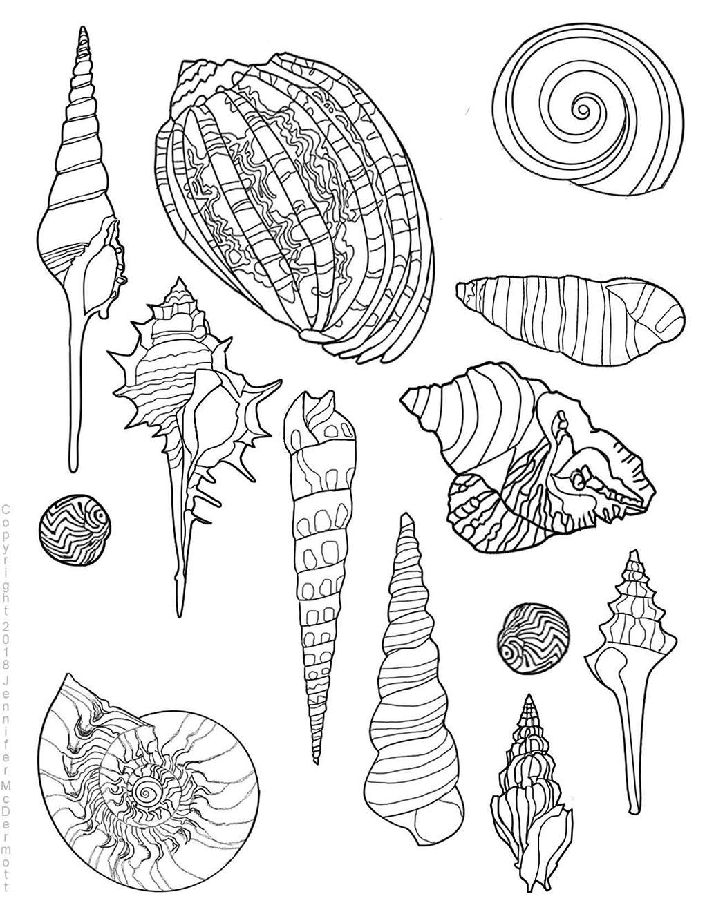 This Is A Free Seashell Design Coloring Page That Anyone May Download And Color I Have 5 More Seashell Coloring De Turtle Outline Free Clip Art Coloring Pages