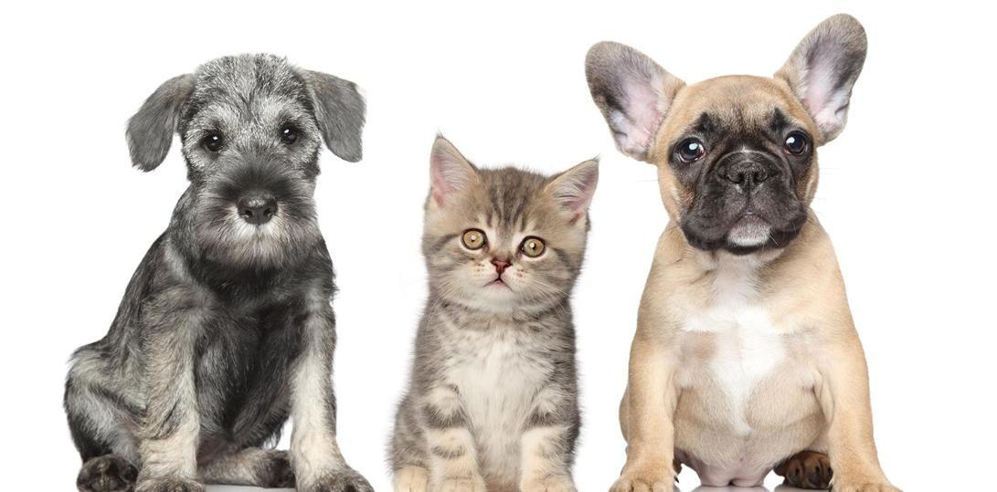 South Huntington Animal Hospital WV OH KY veterinary