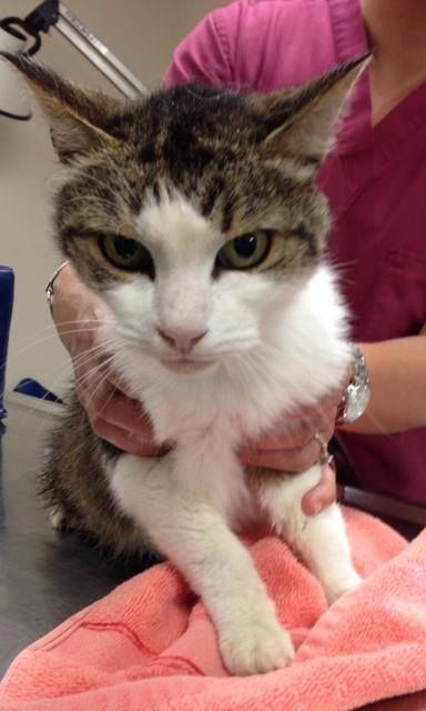 Tabby White West Hartford Animal Control Page Liked July 13 07