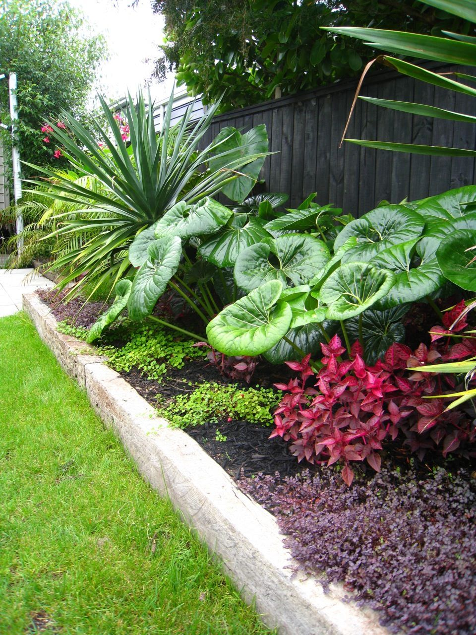 Auckland Landscape Designer Kirsten Sach Landscape Design Ltd Small Garden Landscape Tropical Landscaping Small Tropical Gardens