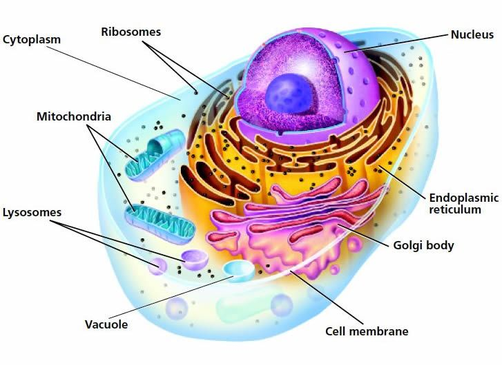 Cell Parts Grude Interpretomics Co