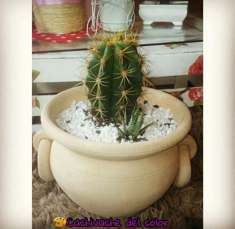 Maceta de ceramica.. Decoración moderna.. Cactus.. Maceta para ...