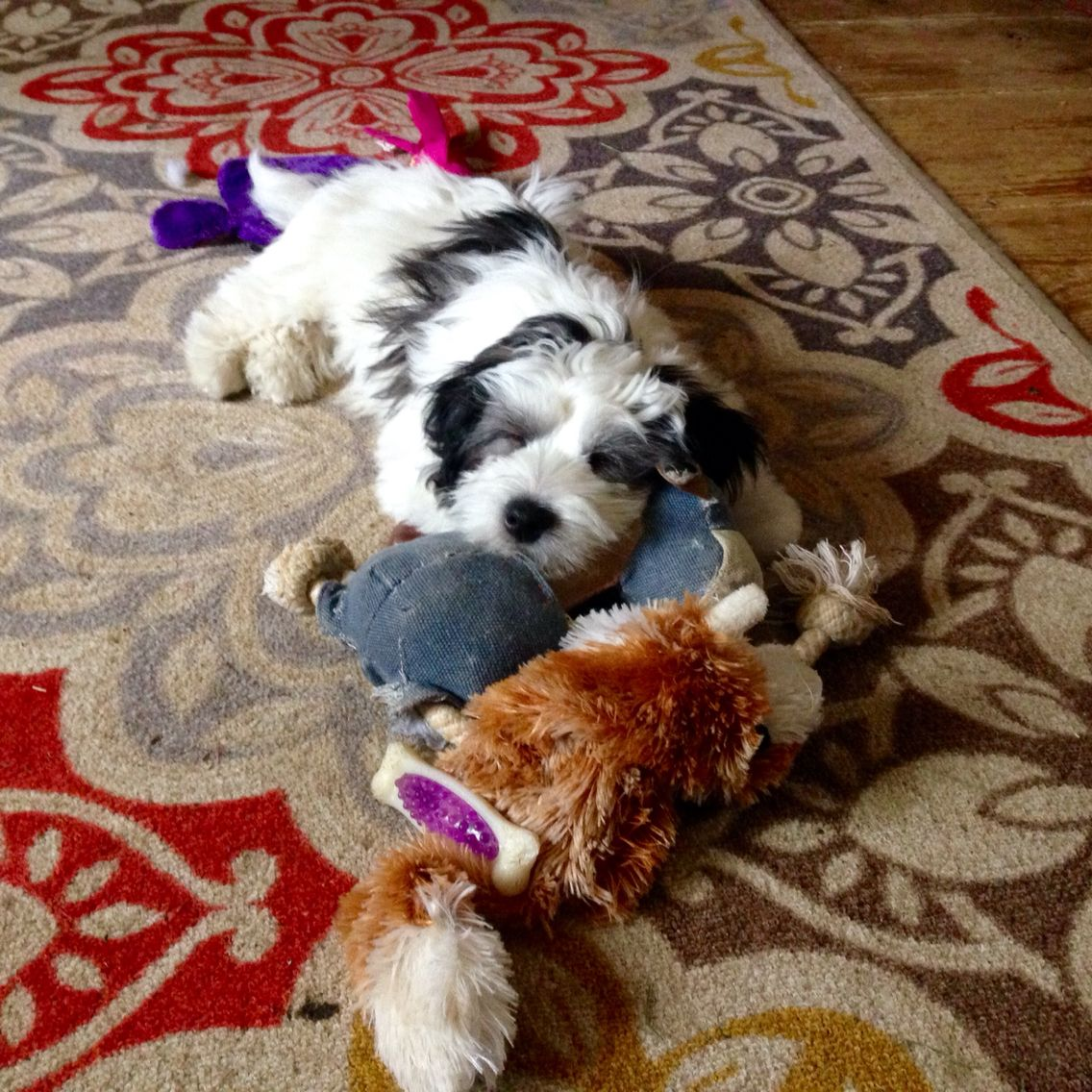 4 Months Old! Sleeping With The Toys!