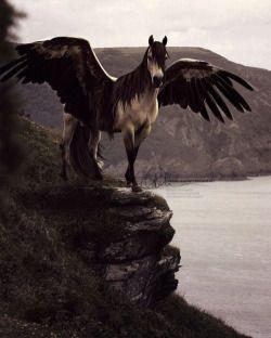 Ilvermorny Library Fantasy Horses Pegasus Fantasy Creatures