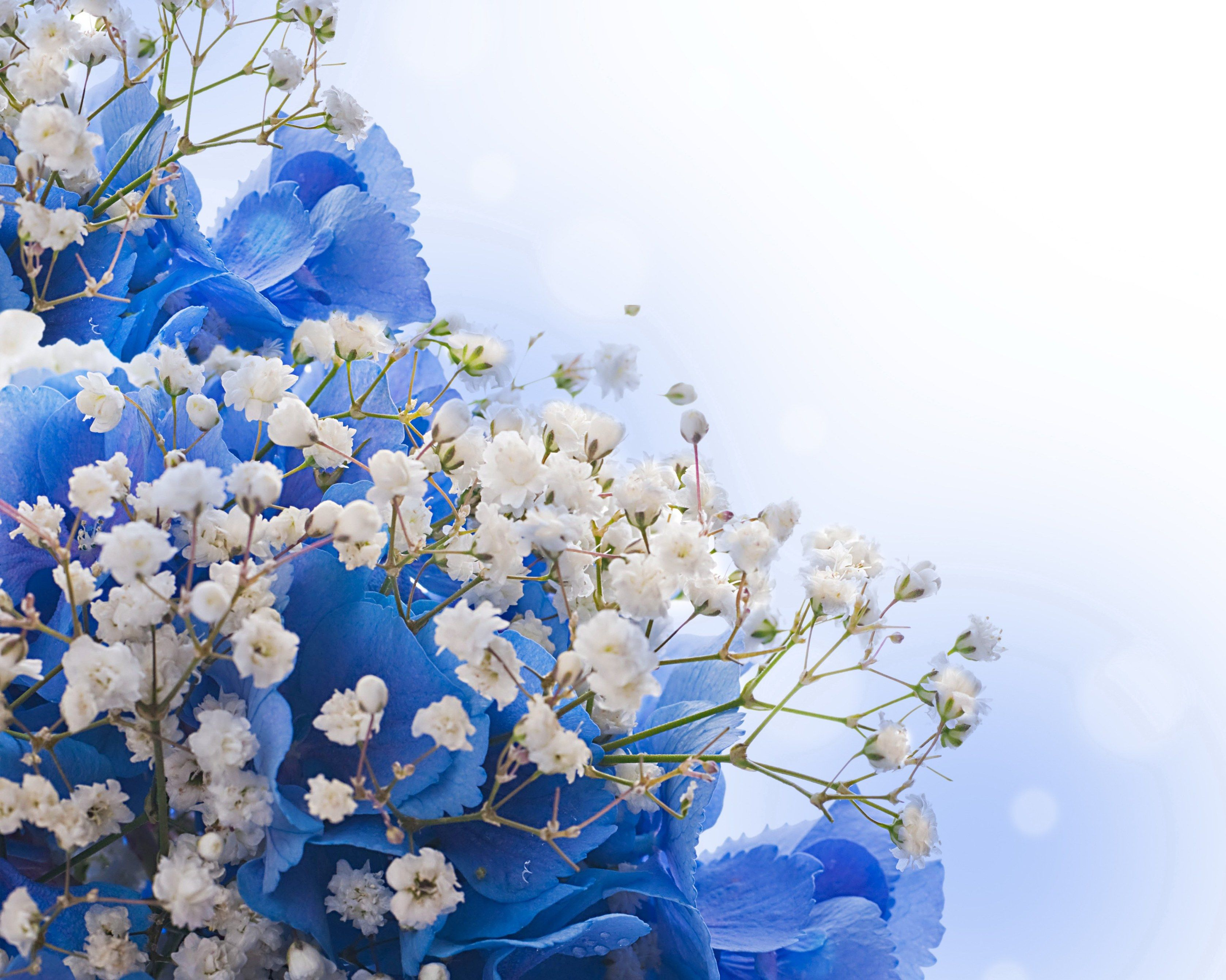 Blue Flowers Desktop Background Wallpapers Hd Free 522008 White And Blue Flowers Beautiful Flowers Wallpapers Flowers