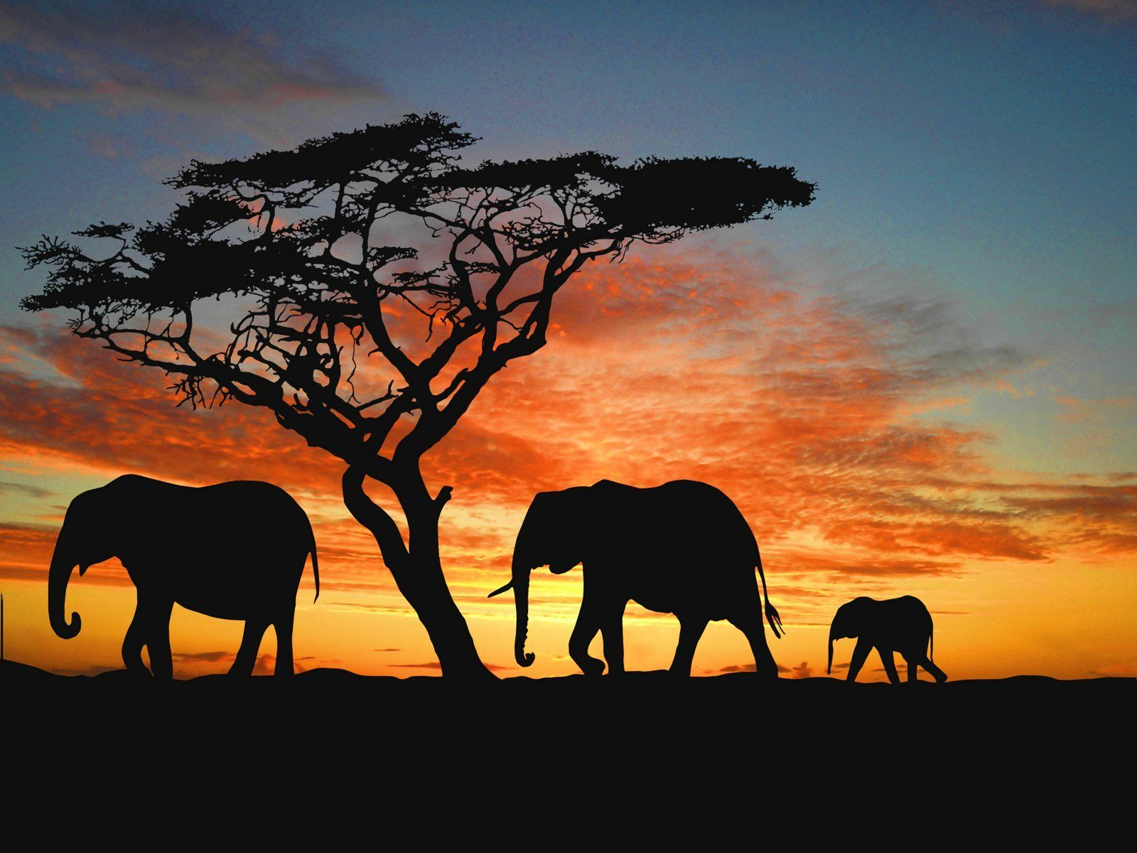 Fondos De Pantalla De Elefantes Wallpapers De Elefantes Paisajes Con Animales Pintura De Elefante Elefantes
