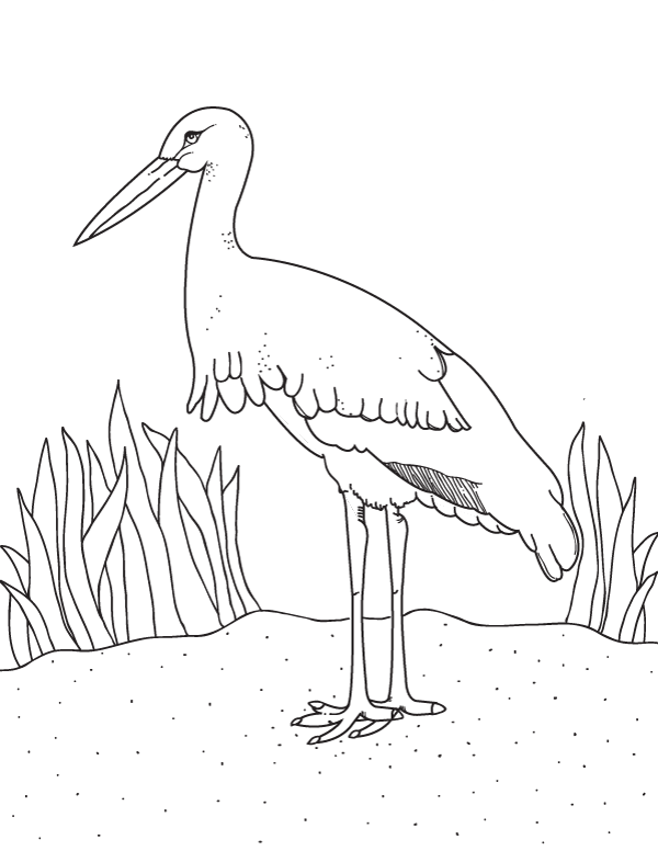 Free Printable Stork Coloring Page Download It From Https Museprintables Com Download Coloring Page Stork Bird Printables Coloring Pages Stork