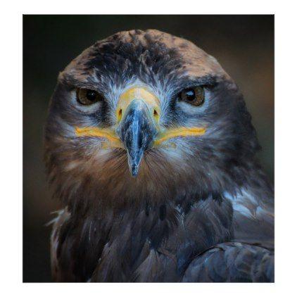 Eagle Portrait Poster Nature Diy Customize Sprecial Design Cute Statuses Funny Funny Facebook Status