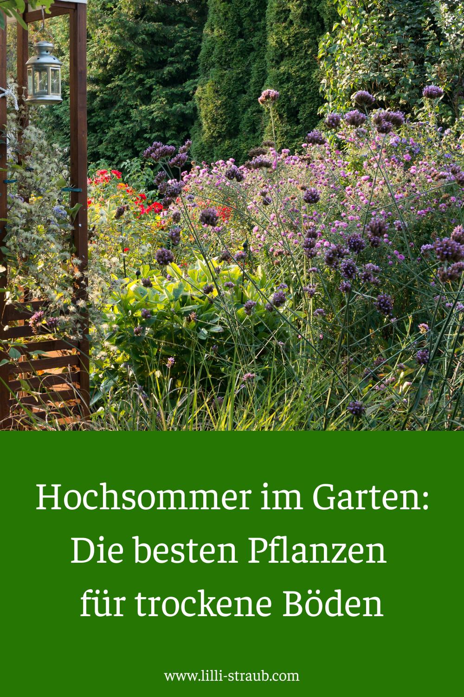 Die besten Pflanzen für trockene Böden in Deinem Garten