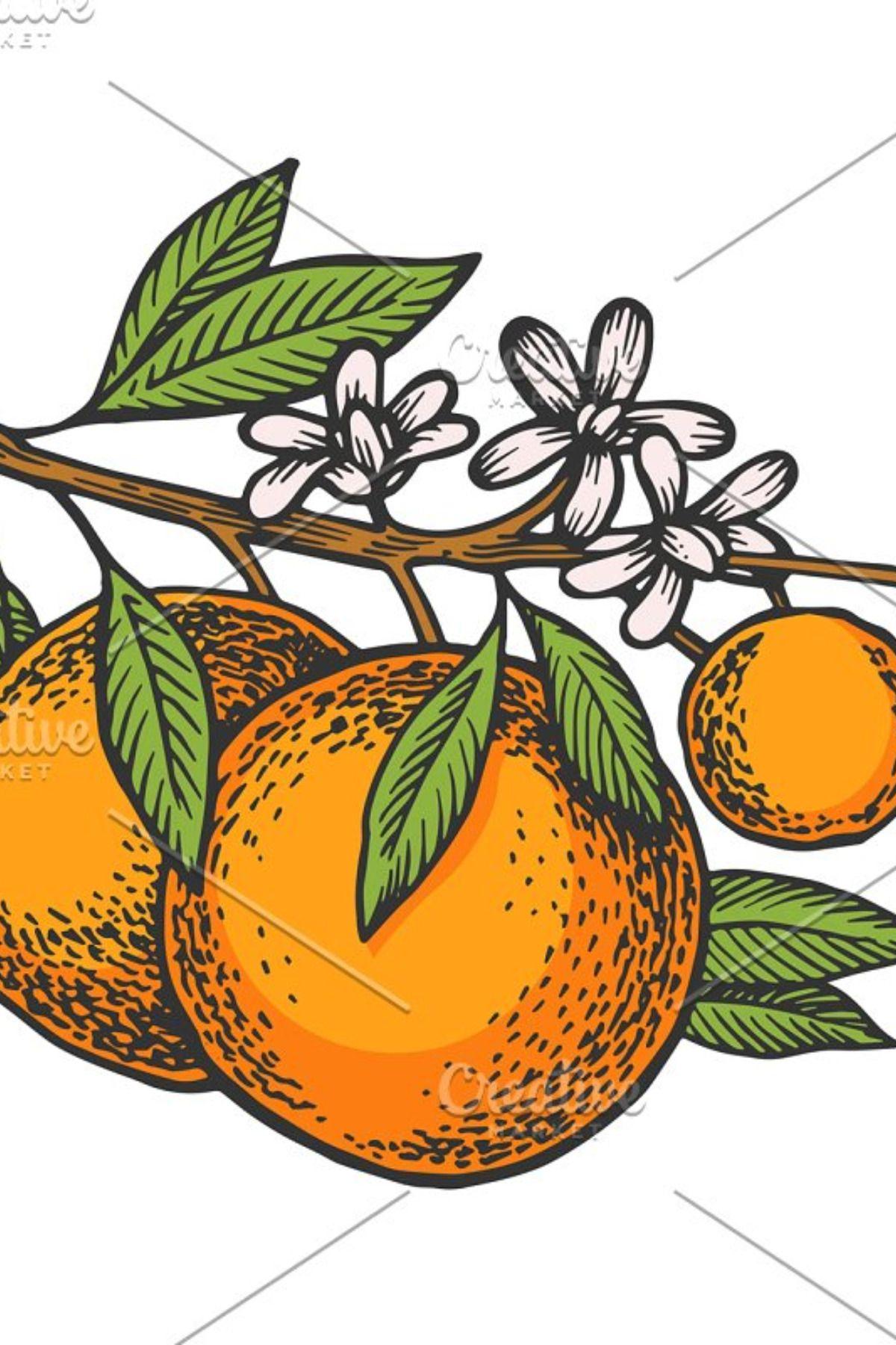 Orange tree branch color sketch   Sketches, Tree sketches ...