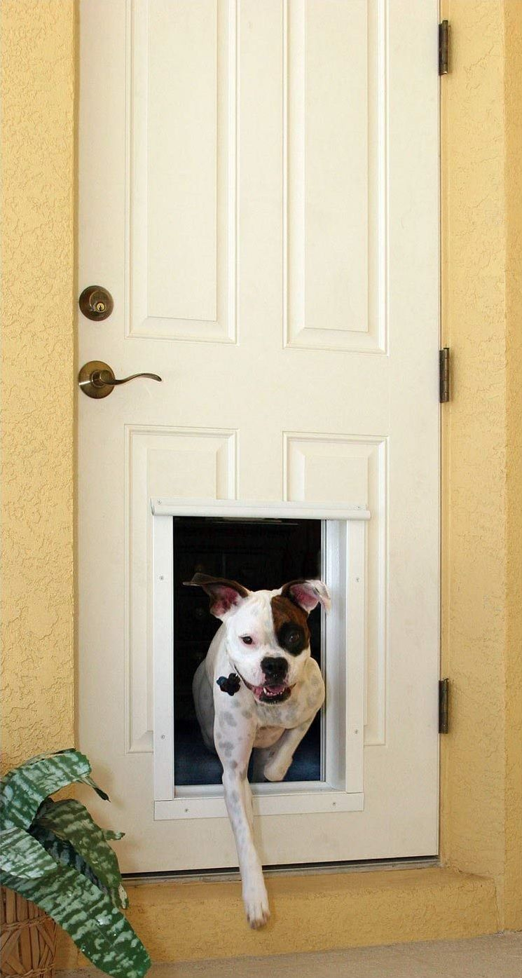 Best Electronic Dog Door Reviews Dog Door Best Dog Door Dogs