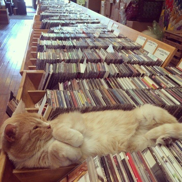 """Sorry, did you need help finding a record? Just give me"