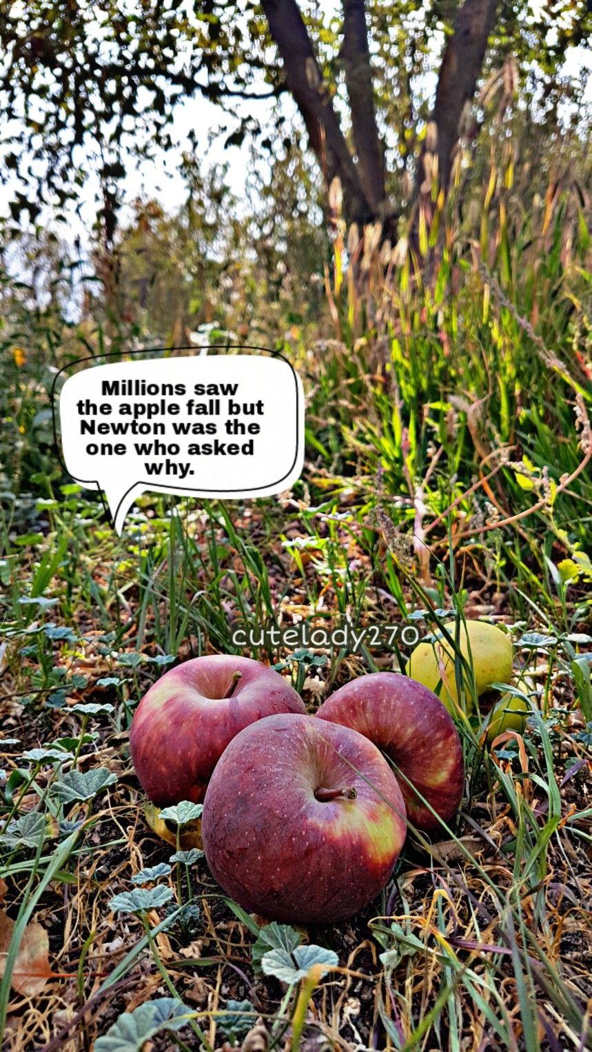 رأى الملايين سقوط التفاحة لكن نيوتن هو الذي سأل عن السبب Apple Food Fruit
