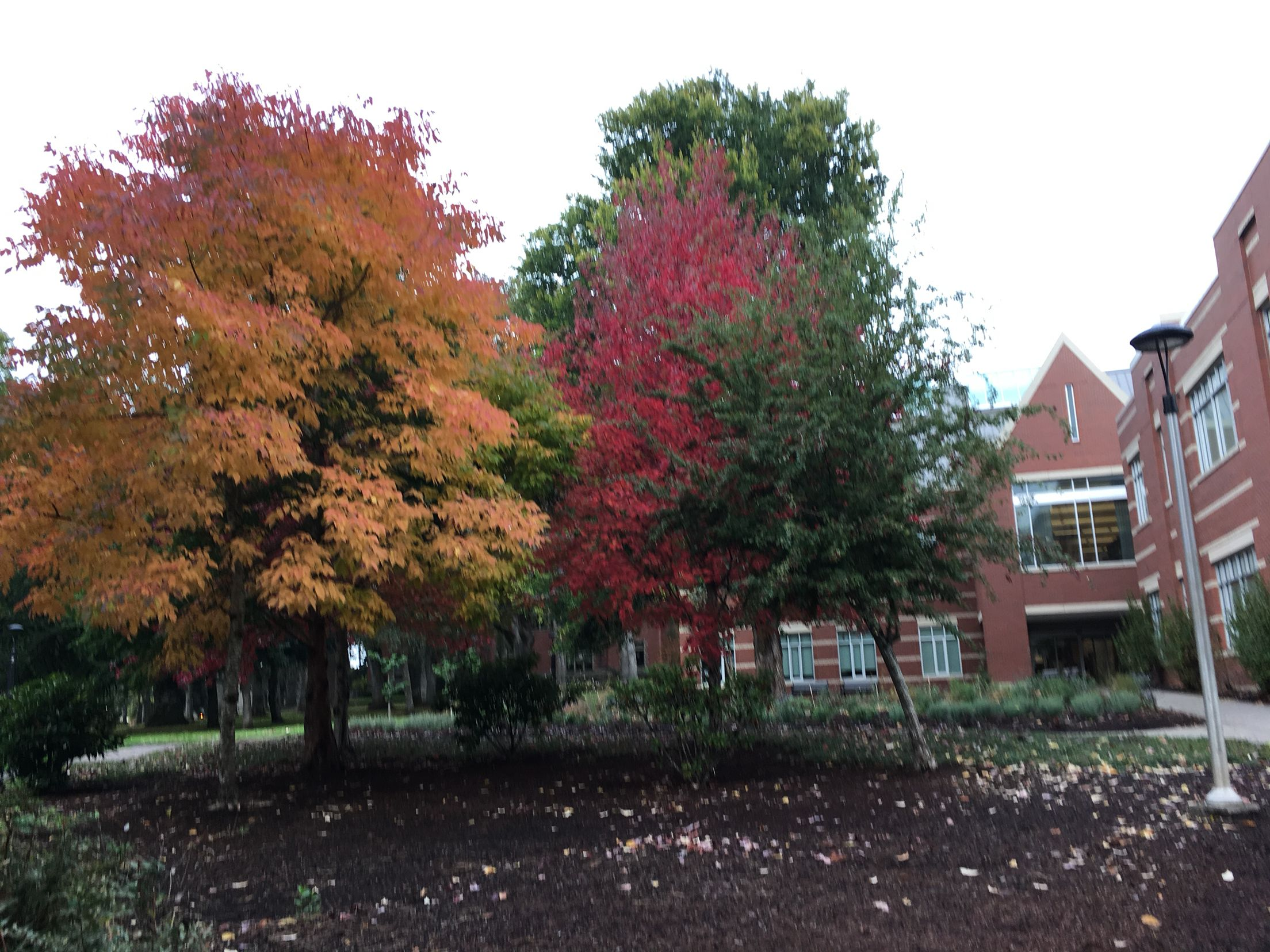 On the campus of Pacific University Forest Grove, Oregon