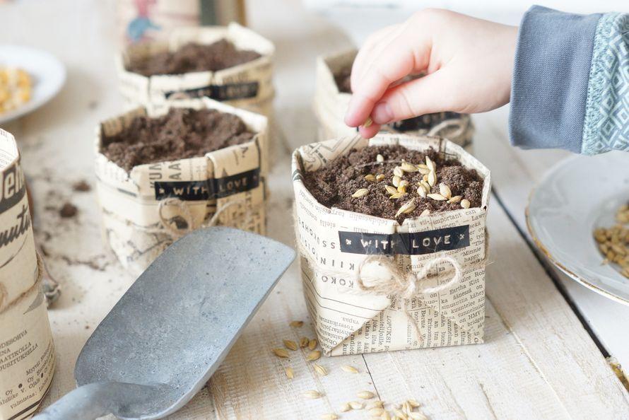 Tee itse sanomalehdistä istutuspotti. Kasvata istutuspotissa rairuoho pääsiäiseksi ja taimet kesäksi. | Kodin Kuvalehti