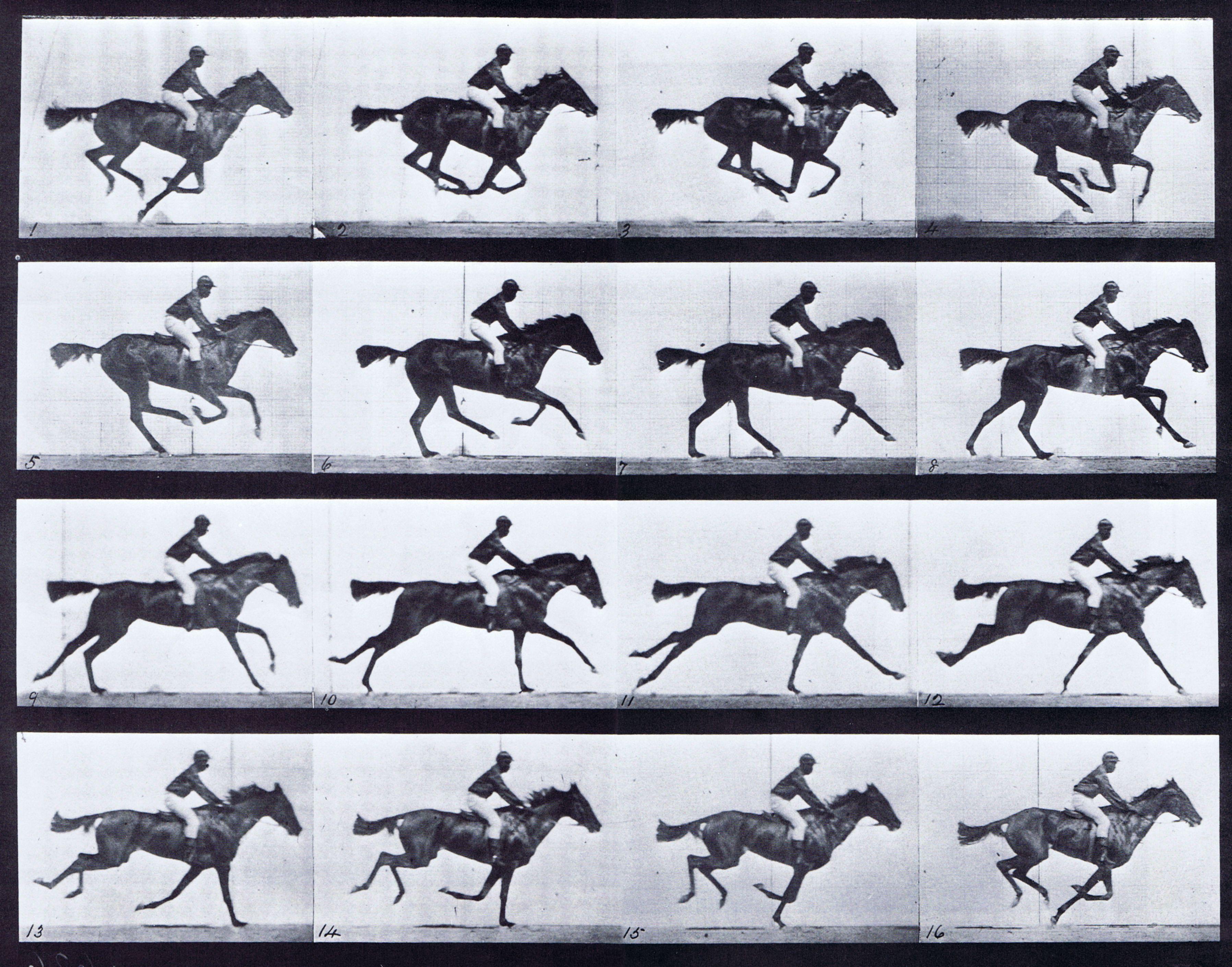Large Muybridge Art Refrence - Looping Horse Galloping Saddled ... for Animation Horse Running  113cpg