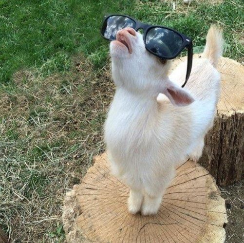 Can T See The Haters Wednesday Memes Funny Wednesday Memes Funny Wednesday Quotes