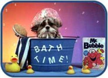 Shih Tzu Bathing Help Shih Tzu Doggy Pup