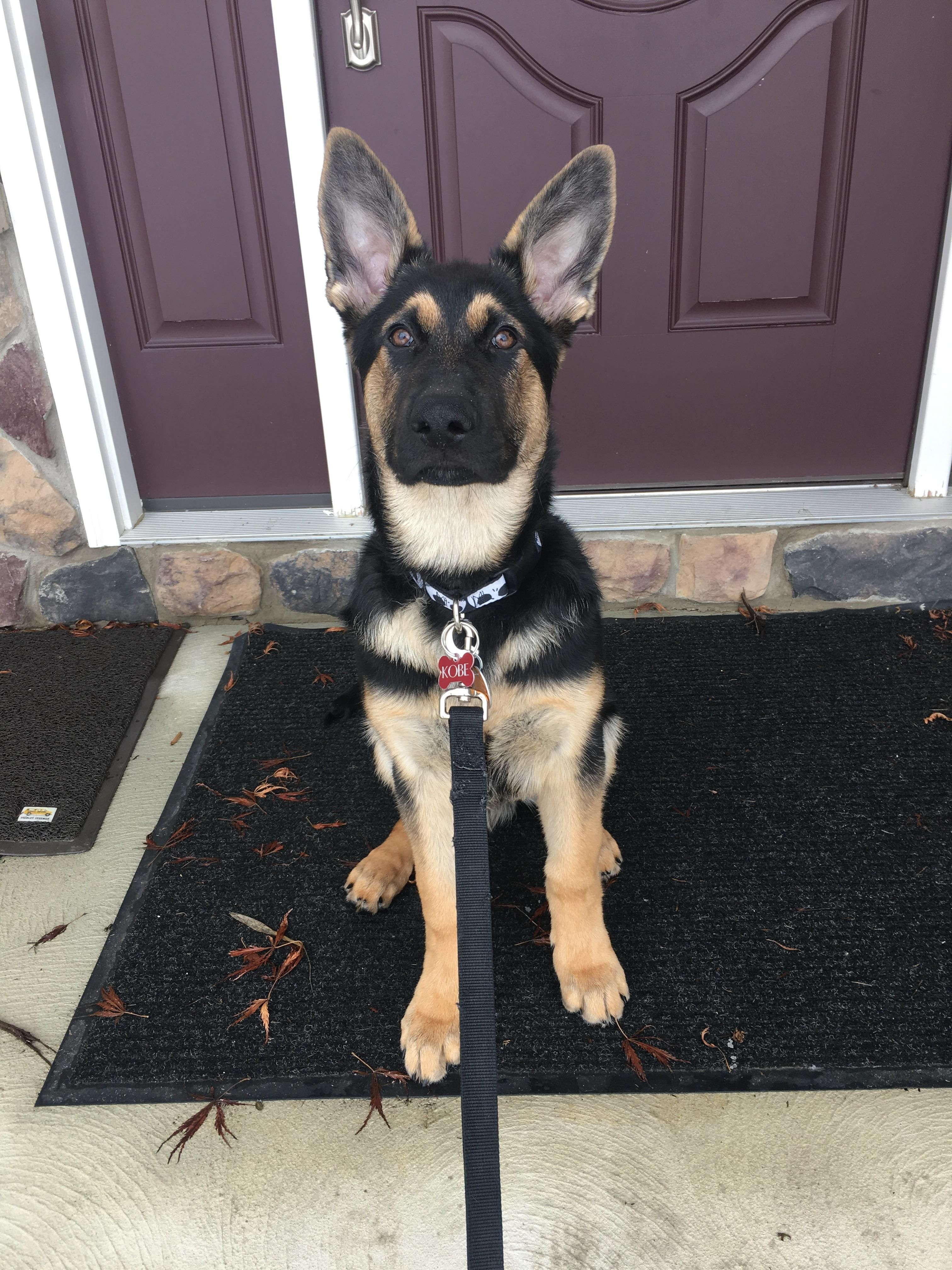 Im 4 Months Old Today Storyful Dog Best Pinterest Dog Profile