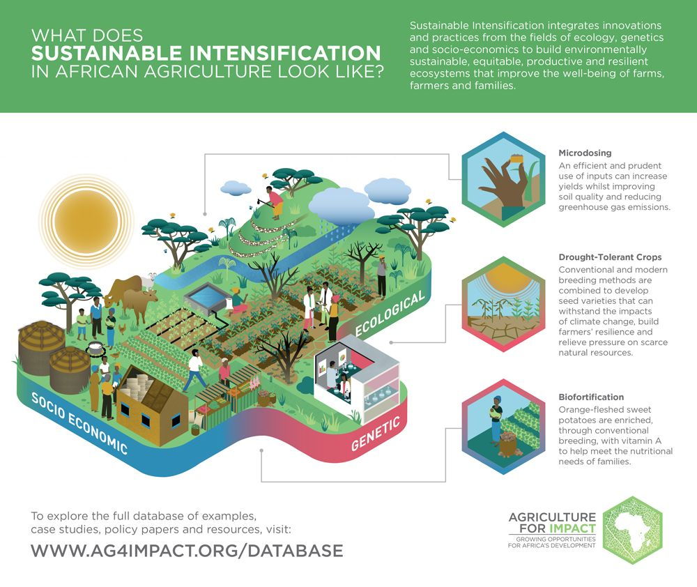 Infographic: Sustainable Intensification: Radical measures and new paradigms for achieving food security in Africa