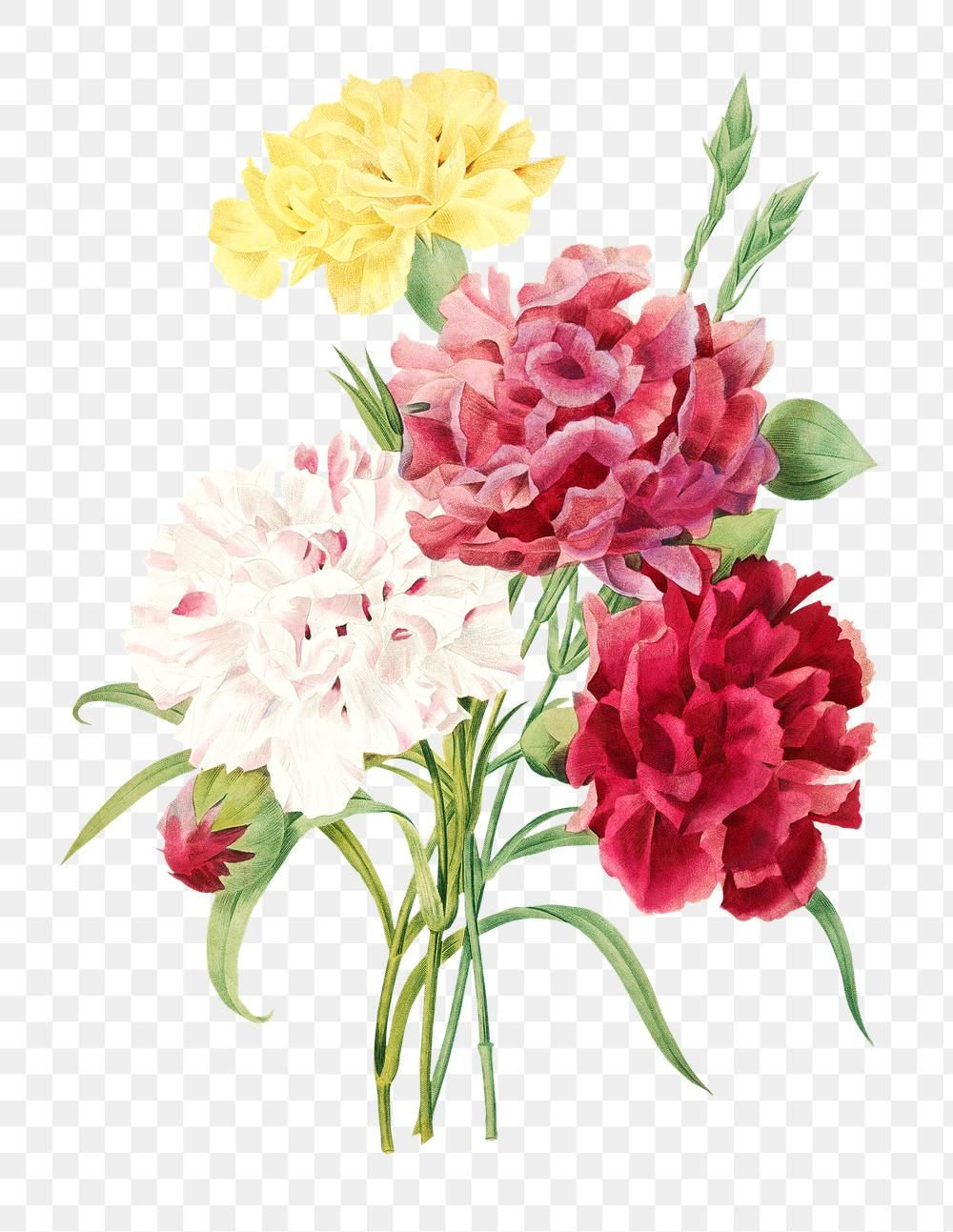 Carnation Flowers Sticker Overlay Design Element Free Image By Rawpixel Com Gade Flower Illustration Carnations Paper Texture Background Design