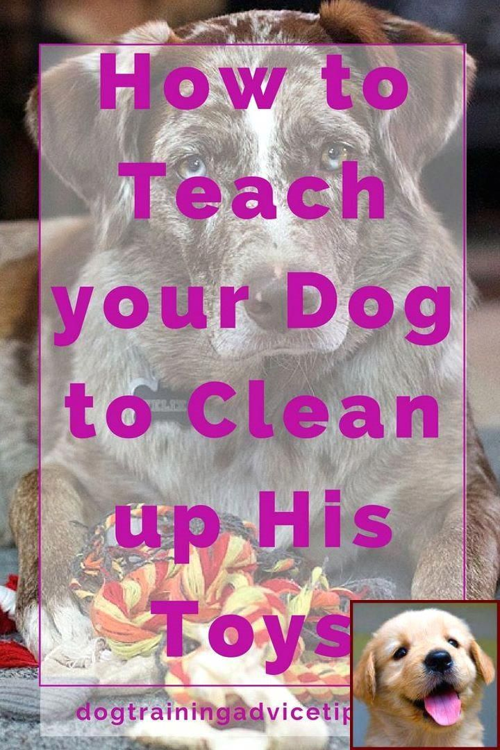 10 Pro Tips for Dog Training by Experts Puppy training