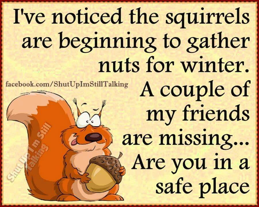 My nutty friends | Funny winter quotes, Funny quotes