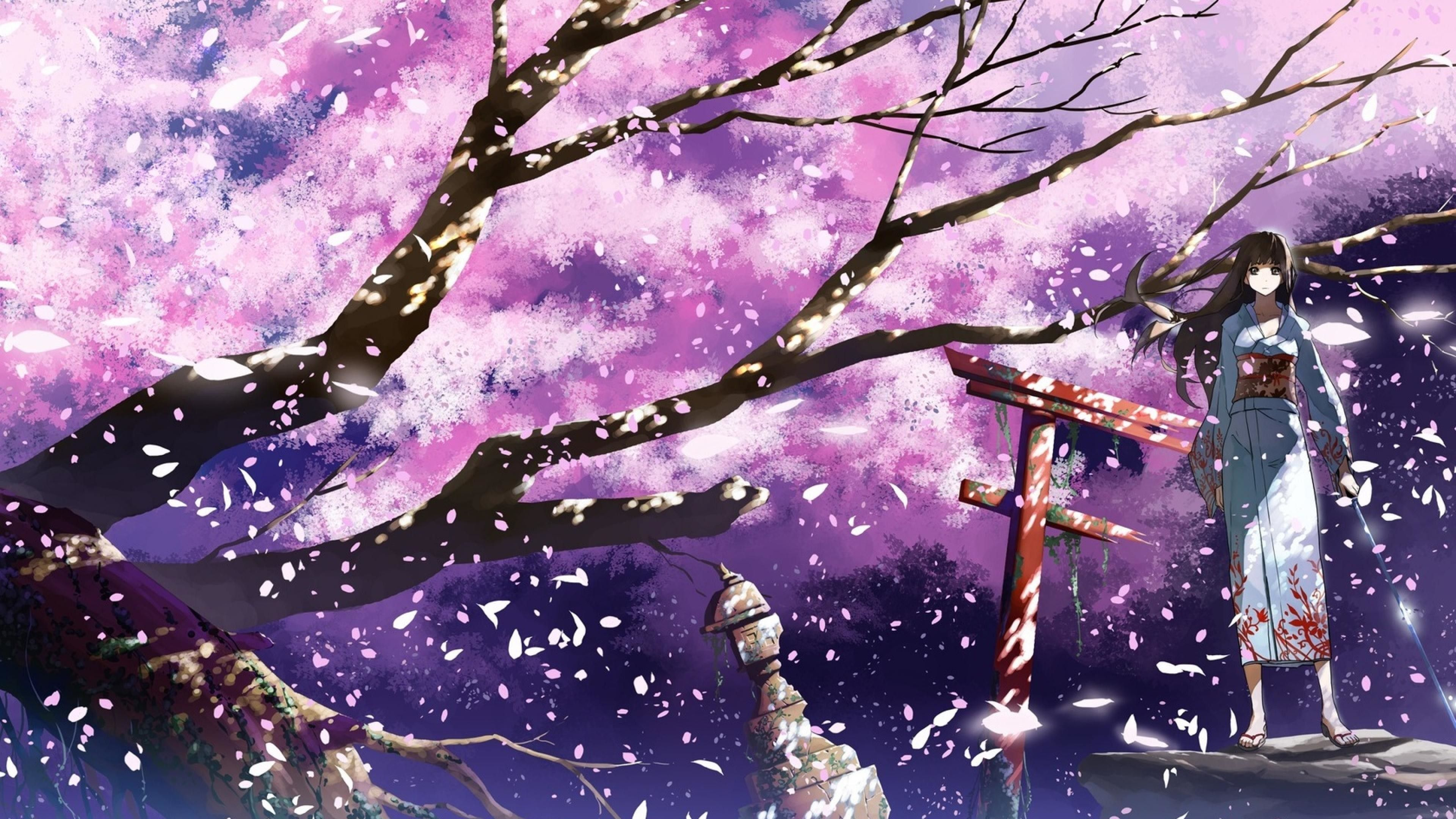 3840x2160 Desktop 4k Of The Day 15 20 Cherry Blossoms Anime Cherry Blossom Cherry Blossom Wallpaper Anime Wallpaper